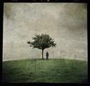 The Burial Tree (II)