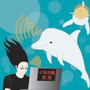 Dolphin Sonar